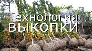 видео Деревья крупномеры: посадка саженцев из питомника и пересадка