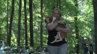 Beagle Freedom Project Dc7 Rescue