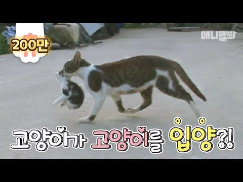 (대박사건) 고양이가 고양이를 입양하겠다고 찾아옴ㅋㅋㅋ