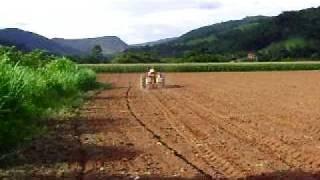 MF 50x Plantando Milho