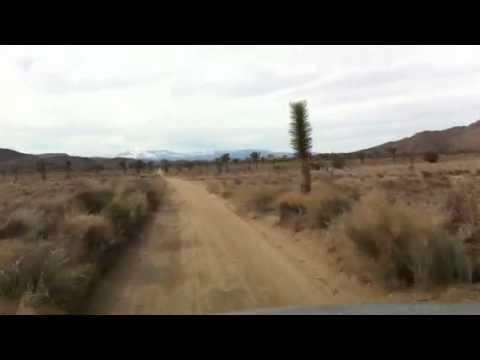 Dirt Road Joshua Tree