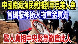 中國南海漁民竟捕到罕見美人魚,當場被神秘人物重金買走,驚人真相中央緊急徹查此人!