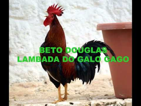 BETTO DOUGLAS - LAMBADA DO GALO GAGO.wmv