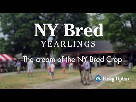 The New York Bred Sale: Where Will You Be?