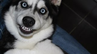Смешные фото животных #3