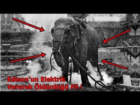 Edison'un Elektrik Vererek Öldürdüğü Fil Topsy !