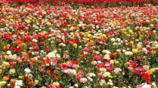 """"""" Dueto Los Armadillos"""" Flores Finas"""