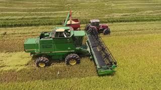 2017 Katy Texas Rice Harvest