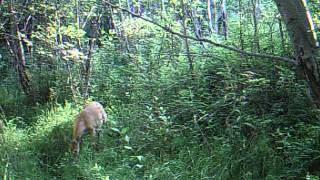 GameCam2 North Fork Salmon Idaho Day time video 7/13/2013