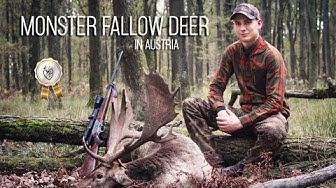 NH: Kuusipeurajahti | Hunting a Monster Fallow buck in Austria | 2019