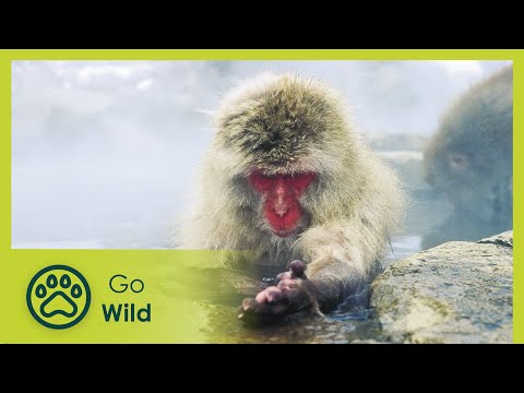 Wildest Arctic - The Secrets of Nature