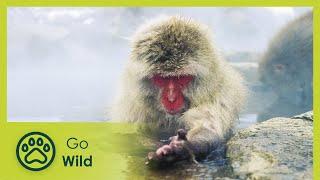 Wildest Arctic - The Secrets of Nature thumbnail