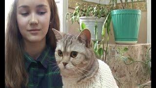 Традиционная выставка кошек открылась на станции юных натуралистов
