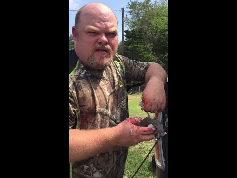 How to clean a dove in 5 sec