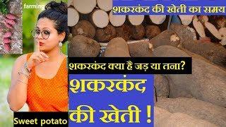 शकरकंद की खेती कैसे की जाए | sweet potato ki kheti |शकरकंद की खेती का समय  |शकरकंद का बीज