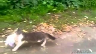 Кот с покупками идет домой. Cat goes to home after shopping. Смешные коты.