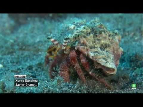 La primera mina de oro submarina