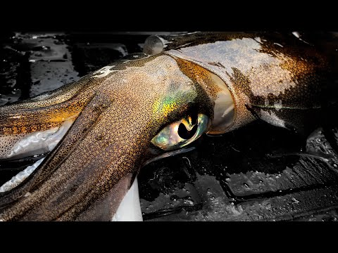 BIG SQUID TACTICS FOR DEEP WATER - YouFishTV