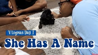 our-new-puppy-has-a-name-vlogmas-day-1