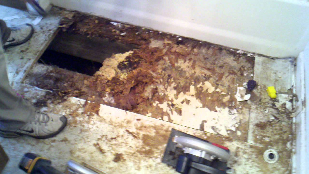 rotten bathroom floor rotten bathroom floor 14251