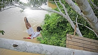 Treetop Dive Into The Amazon River