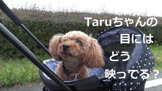 犬用のカートを買いました(*´ω`*) いろいろな方のブログを読んでいたら...