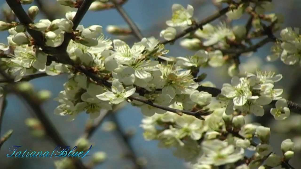 francis-goya-the-old-rowan-tree-bluesensation75