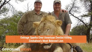 Outrage Sparks Over American Dentist Killing Zimbabwe's Most Beloved Lion