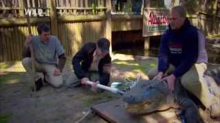 Анатомия животных - Крокодил