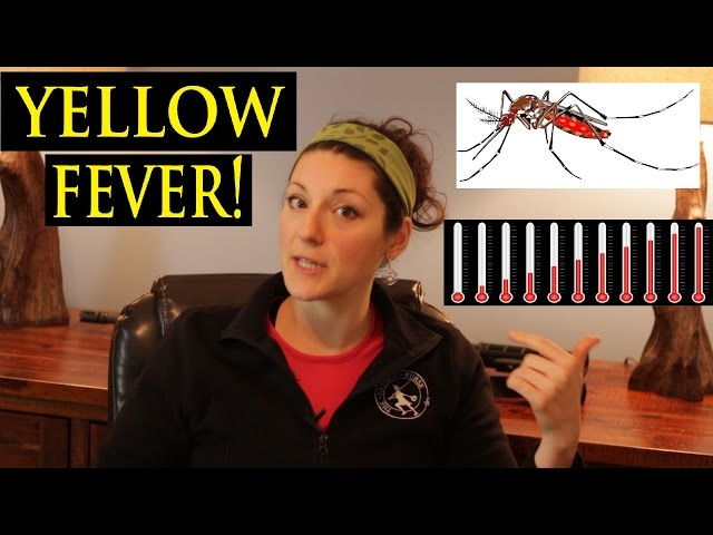 How to Prepare for Yellow Fever