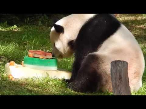 Tian Tian's Birthday 8/27/15