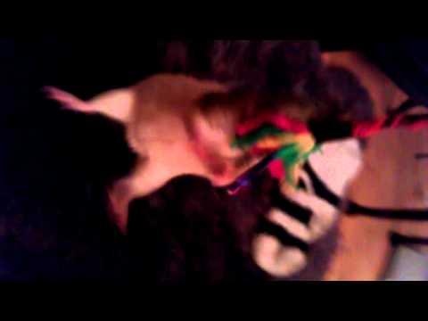 Dancing Rat