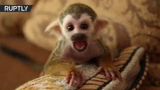 В Тюмени кошка усыновила маленькую обезьянку