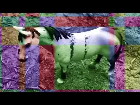 ~Battle Scars~ schleich horse music video