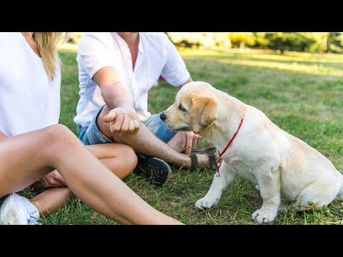 Puppy Socialization - How To Socialize A Puppy Before Shots! When Can You Take Your Puppy In Public?