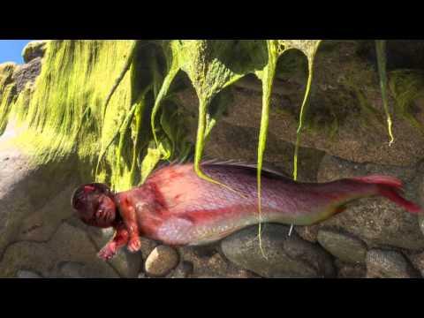 Sirenas reales encontradas vivas. Las fotos más impactantes