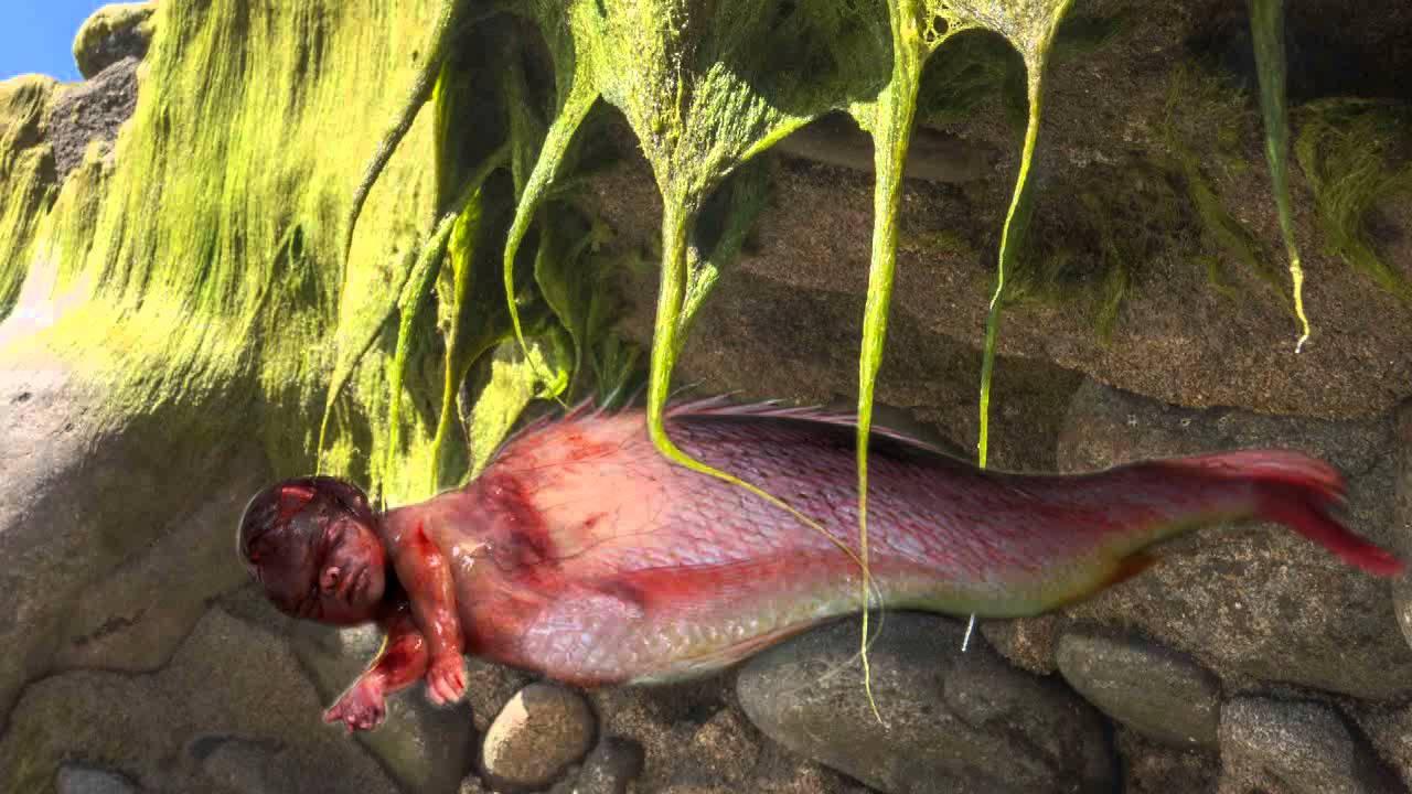 Sirenas reales encontradas vivas Las fotos ms impactantes  YouTube