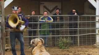 Jackass 3,5 (the ram jam)