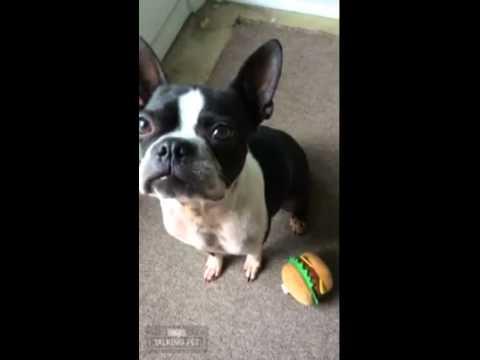Chockit Shake   Burger Saga Pt 1
