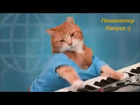 Говорящие коты! Сборник №3