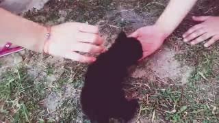 Котята учатся ходить