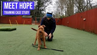 Calming a highly reactive Irish Terrier