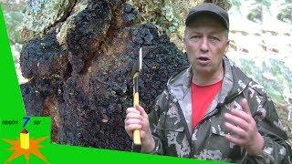 видео Можно ли беременным грибы: польза и вред даров леса