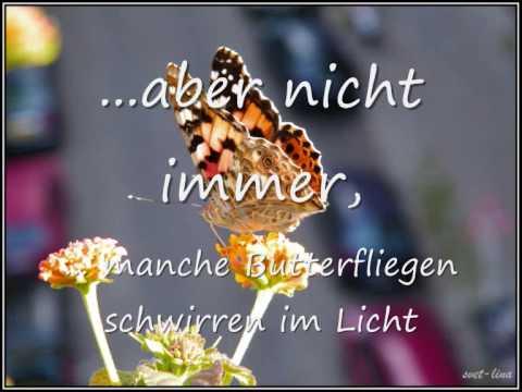 Ladybird-Song II - Marienkäfer-Lied II