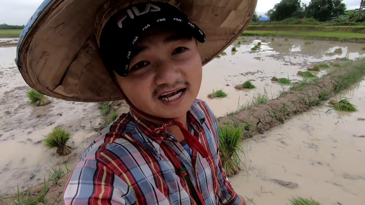 ไปช่วยยกต้นกล้าให้สาวๆแอ่นที่บ้านแงนเชียงตุง Help Ann girls for growing rice at our farms.