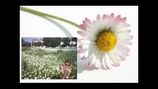 FATIH KISAPARMAK - PAPATYA FALI