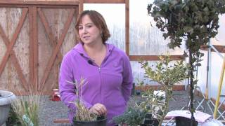 Gardening Tips : Growing Edible Bamboo Shoots