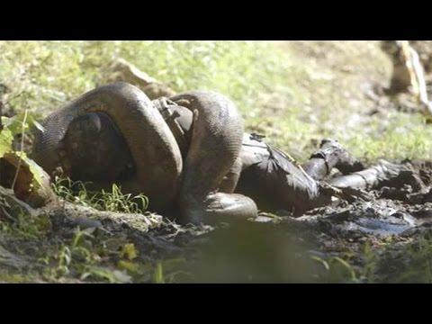 Biggest TV Letdown Ever? 'Eaten Alive' Star Backs Out of Snake Stunt
