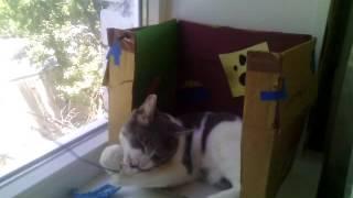 Самое страное имя для кота .Мой кот косяк
