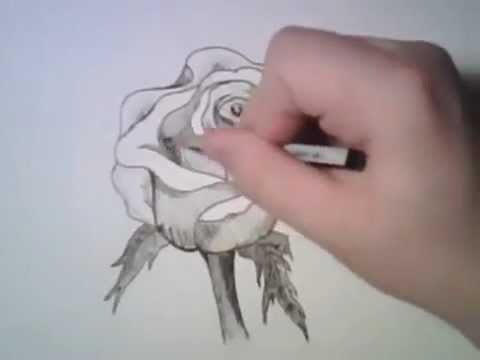 dessiner une rose youtube. Black Bedroom Furniture Sets. Home Design Ideas